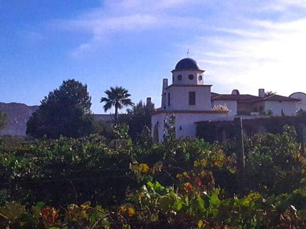 adobe-form-vineyard