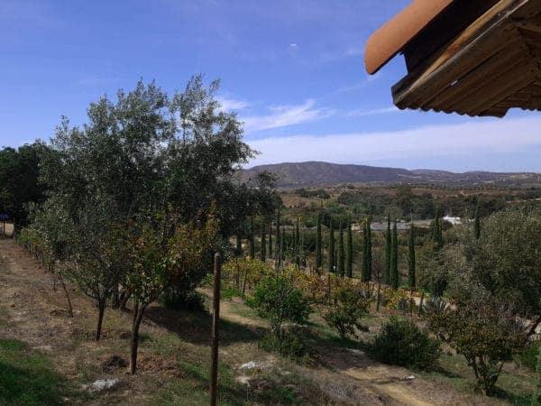 malva-view-2