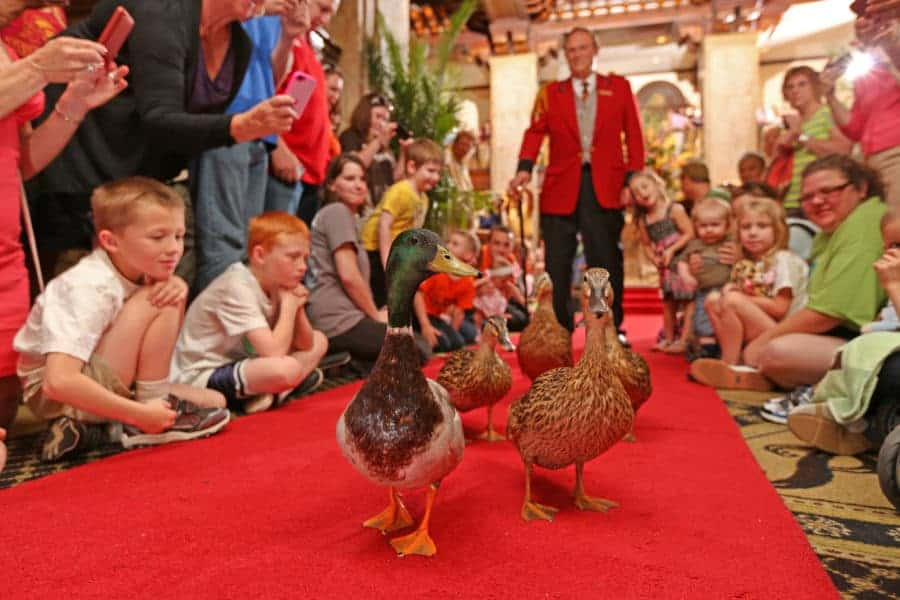 Duck March at the Peabody in Memphis