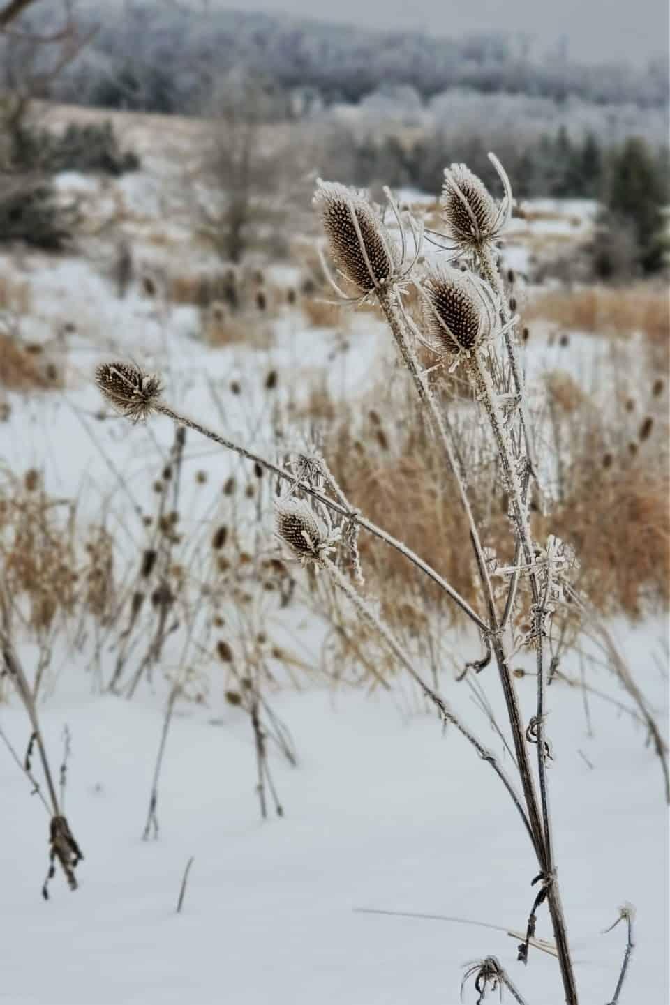 Winterwonderland in Laurel Highlands
